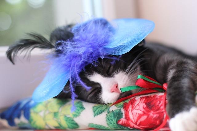cat-2548197_640