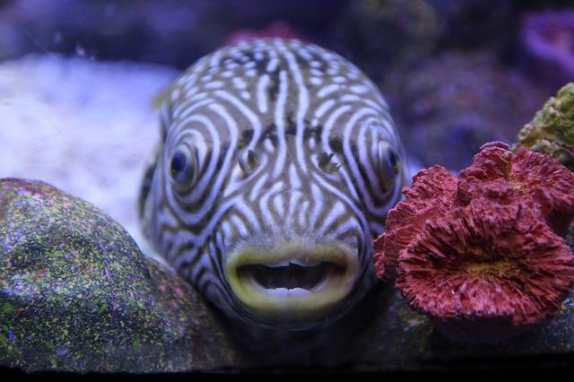 fish-800342_640